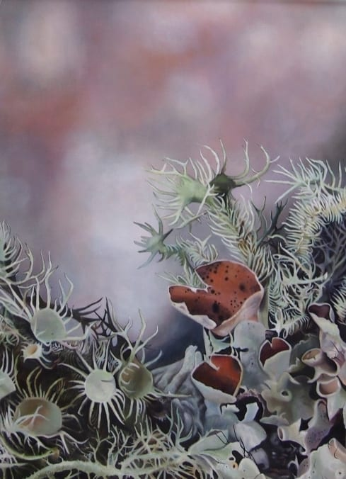 Lichen I, Apalachicola, Florida - Melanie MacDonald