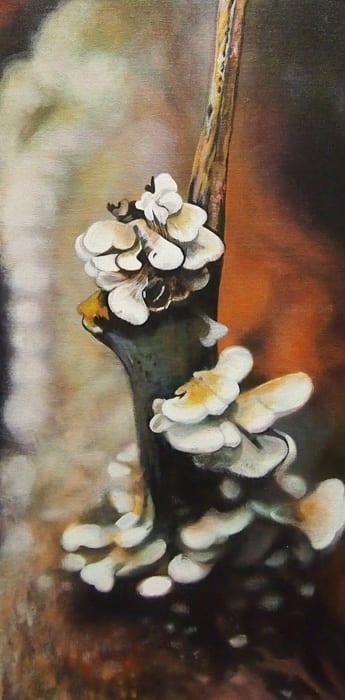 Shelf Fungus - Melanie MacDonald