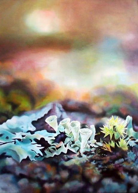 Melanie MacDonald - Pixie Cup Lichen